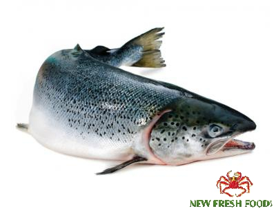 Cá Hồi Nauy Tuơi Nguyên Con 6-7