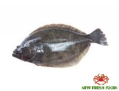 Cá Bơn Nguyên Con