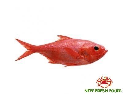 Cá Đỏ Nguyên Con