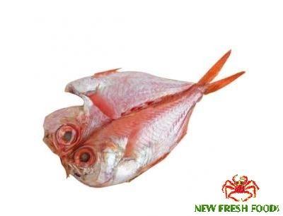 Cá Đỏ Xẻ Bướm